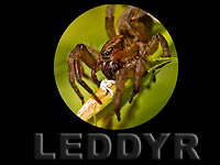 Insekter og andre småkryp