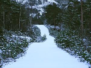 Veien oppover Brekkedalen