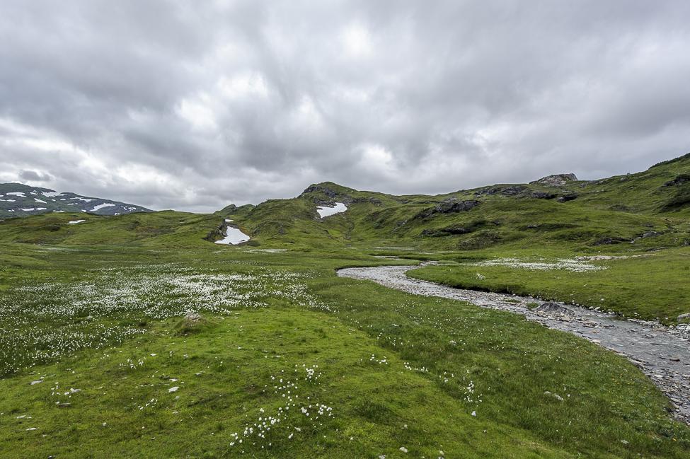 Elv fra Raudbergdalen