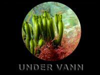 Undervannsbilder